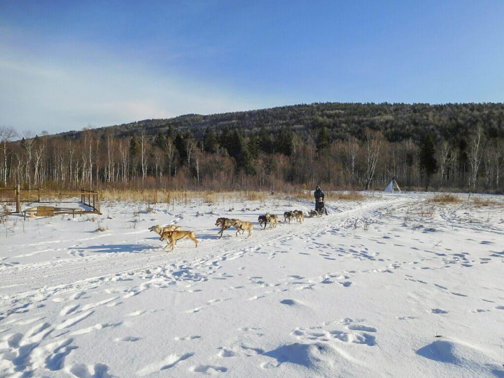 Honden slee tocht in Listvjanka