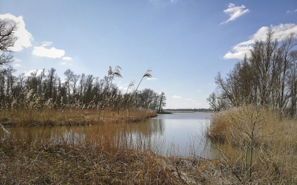 Wandelen in Brabant - de Biesbosch